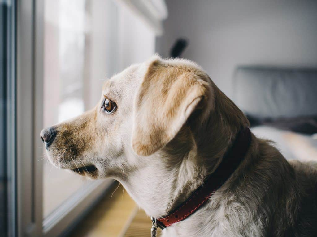 The Best Vacuum For Pet Hair And Hardwood Floors