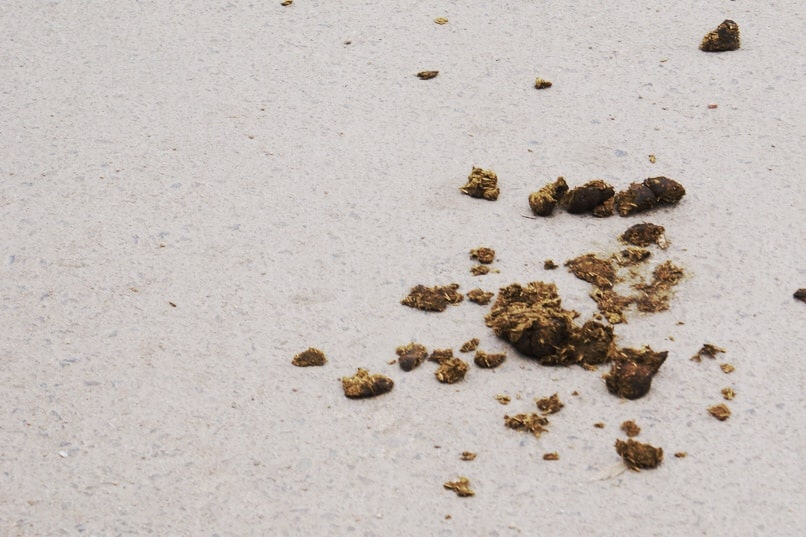 How To Clean Poop Out Of Your Carpet With No Stains Homeviable