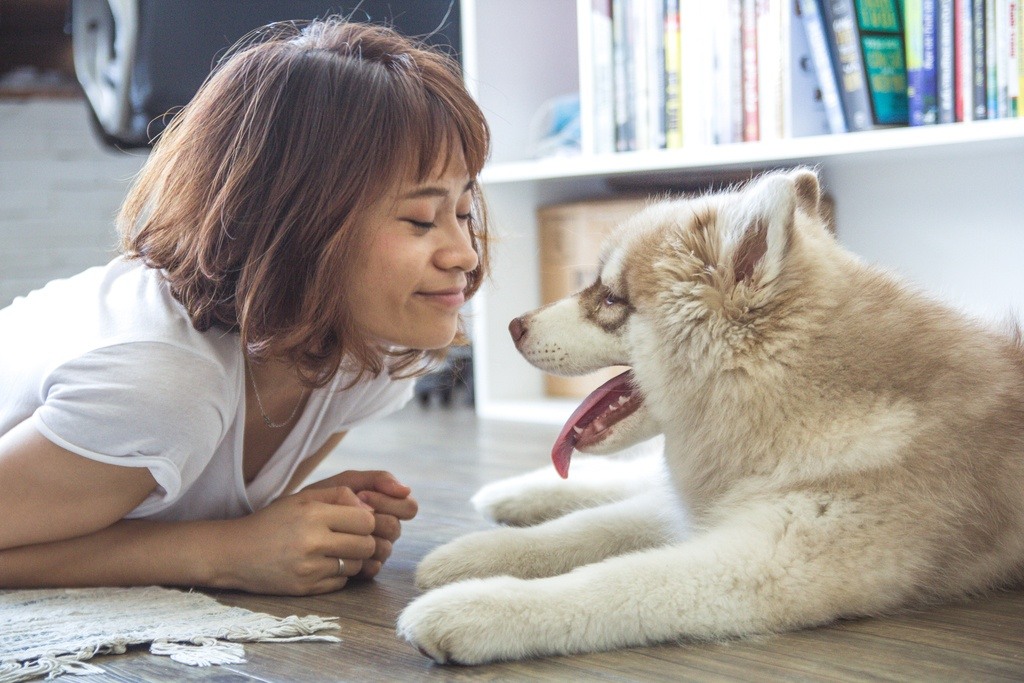 Pet-friendly homeowners don't have to worry about pet hair in their homes