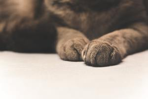 how to clean your dogs paws after a walk
