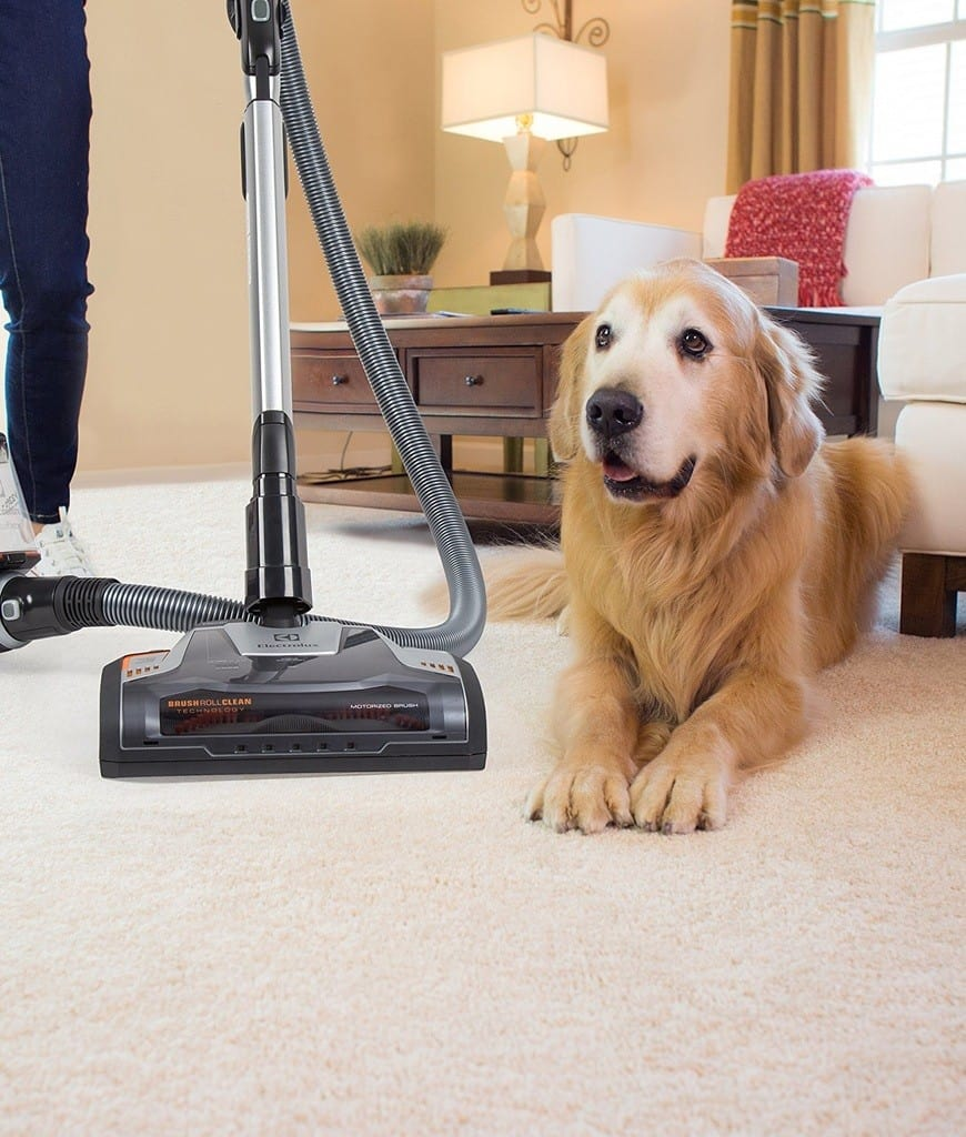 Golden retriever beside a vacuum