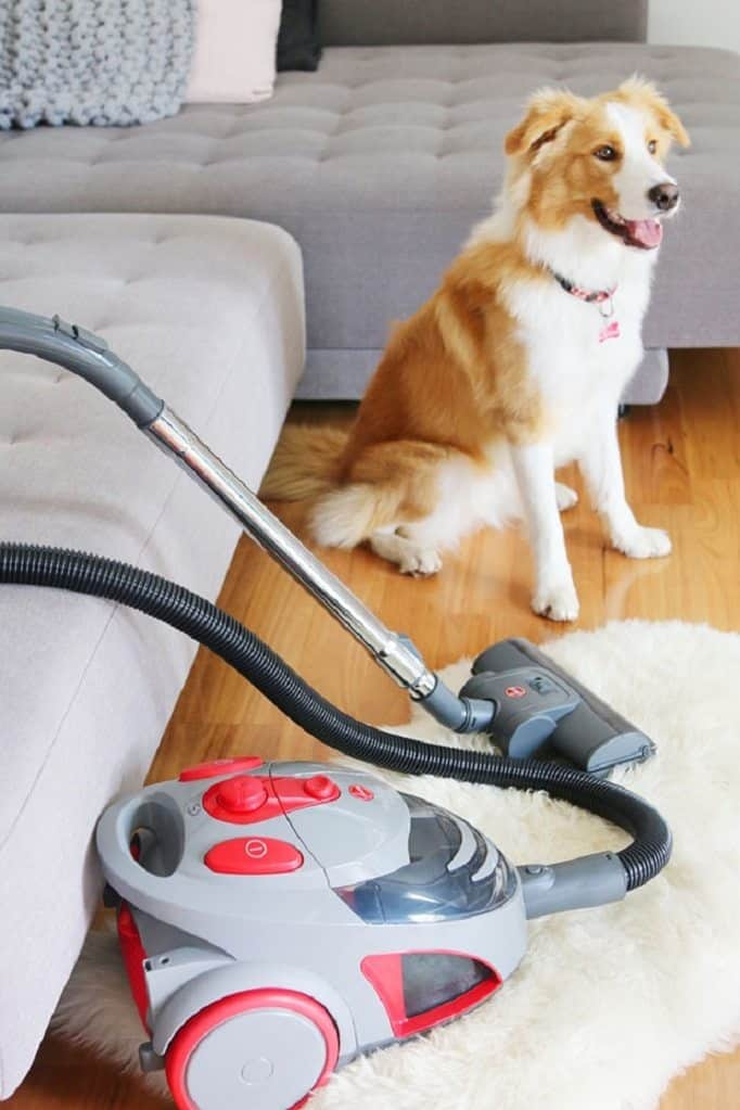 Vacuum cleaner beside a dog in the living room