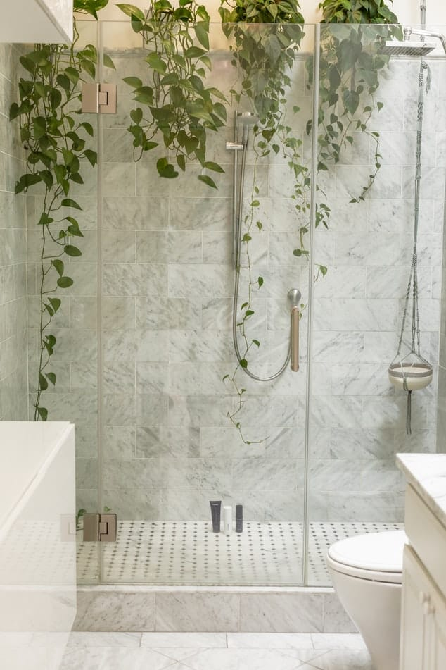 Shower stall decorated with hanging plants