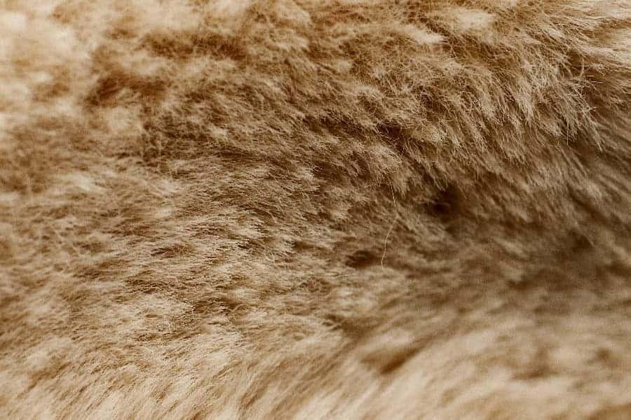 Close-Up shot of sheepskin cover
