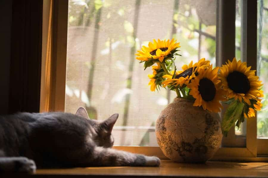 Cat in the window with sunflower vase
